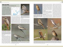 HB02 handbook-of-western-pal.-birds-vol1+2.2 binnen1