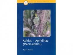 Aphids - Aphidinae (Macrosiphini)