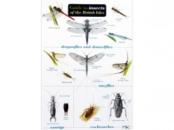 Guide to insects of British Isles