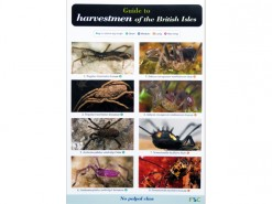 Guide to Harvestmen