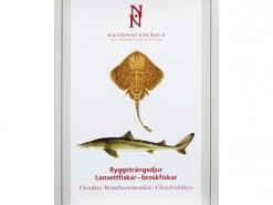vol. Ryggstrandjur : Lansettfiskar - broskfiskar