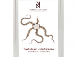 Tagghudingar - svalgstrangsdjur: Echinodermata-Hemichordata