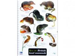Key to British land mammals