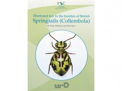 Illustrated key to the families of Springtails
