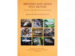 British and Irish Pug Moths - the Eupitheciini