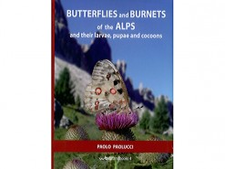 Butterflies and Burnets of the Alps