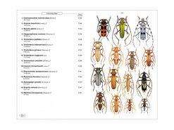 8.231 Coleopteres phytophages vol. 1 binnen1