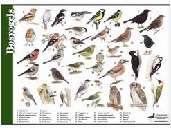 bosvogels