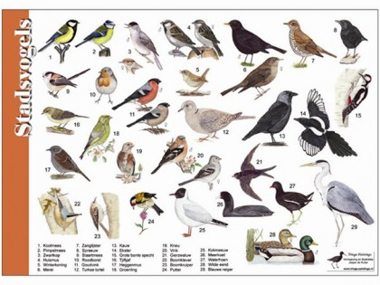 herkenningskaart stadsvogels