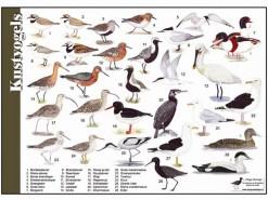 kustvogels
