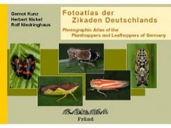 7.573 Fotoatlas der Zikaden Deutschlands