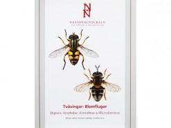 SFF09 Tvavingar Diptera Syrphidae Eristalinae Microdontinae