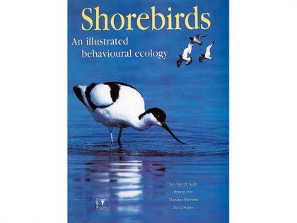 knnv38-shorebirds
