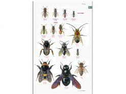 7.297 Veldgids Bijen binnen1
