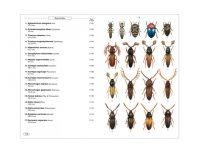 8.231a Phytophagous beetles of Europe vol. 1 binnen1