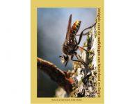 JB01 Veldgids Roofvliegen