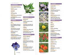 KNNV48 Minigids eetbare bloemen binnenkant