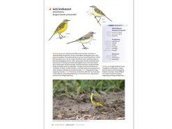 KNNV51 Handboek Vogels NL en B binnen1