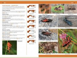 7.905a A Photographic Guide to Insects of Southern Europe binnen1
