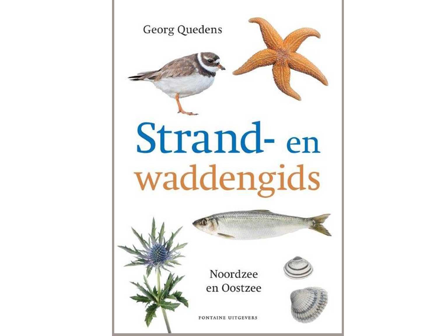 strand-en-waddengids