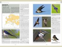 HB02 handbook-of-western-pal.-birds-vol1+2.2 binnen2