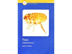 Fleas - Siphonaptera