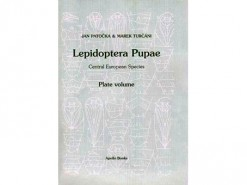 Lepidoptera Pupae.