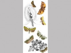 CDrom: British Tortricoid Moths vol. I + II