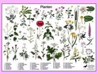 Herkenningskaart Planten