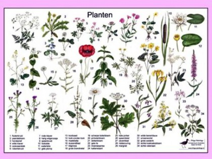 Herkenningskaart Planten 1