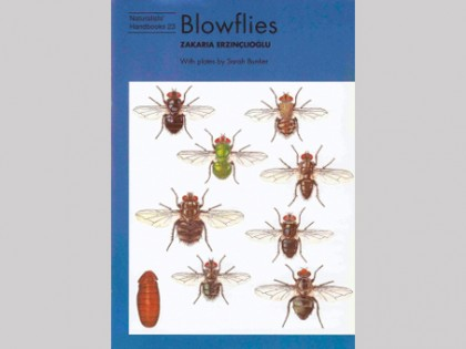 Blowflies 1