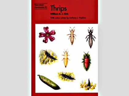 Thrips 1