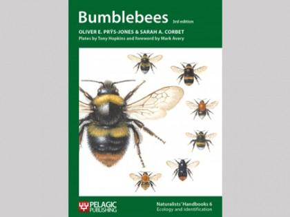 Bumblebees 1