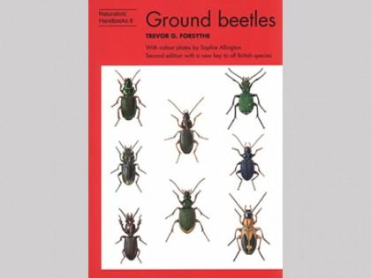 Ground beetles 1