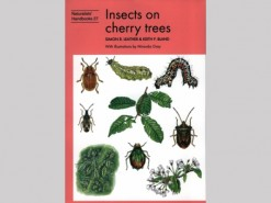 Insects on cherry trees