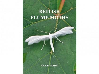 British Plume Moths 1