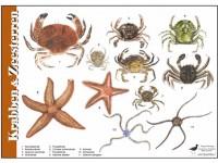 Herkenningskaart Krabben en Zeesterren