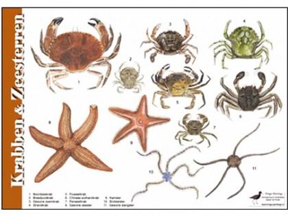 Herkenningskaart Krabben en Zeesterren 1