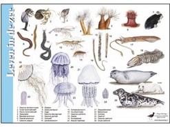 Herkenningskaart Leven in de zee