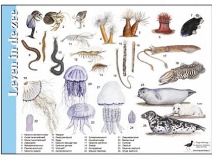 Herkenningskaart Leven in de zee 1