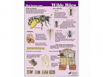 Het leven van wilde bijen 1