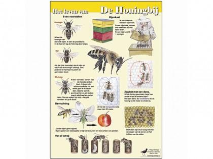 Het leven van de honingbij 1