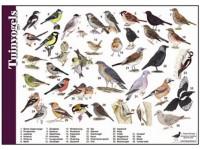 Herkenningskaart Tuinvogels