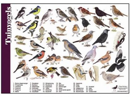 Herkenningskaart Tuinvogels 1