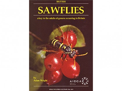Sawflies – a key to the adults 1