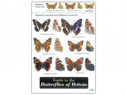 Guide to the Butterflies 1