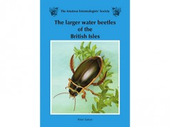 The larger water beetles