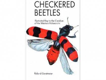 Checkered Beetles – Buntkafer 1