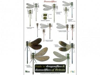 Guide to dragonflies & damselflies 1