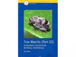 True Weevils part III